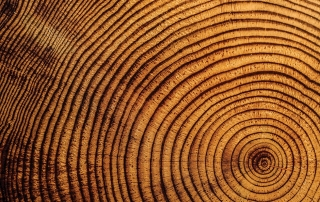 tree-rings-0019_web