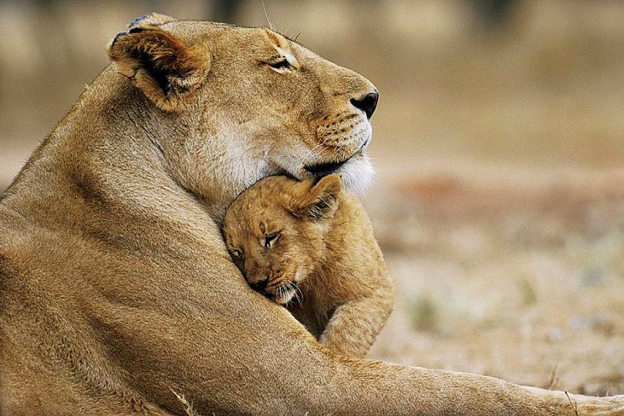 wild-animals-offspring-01