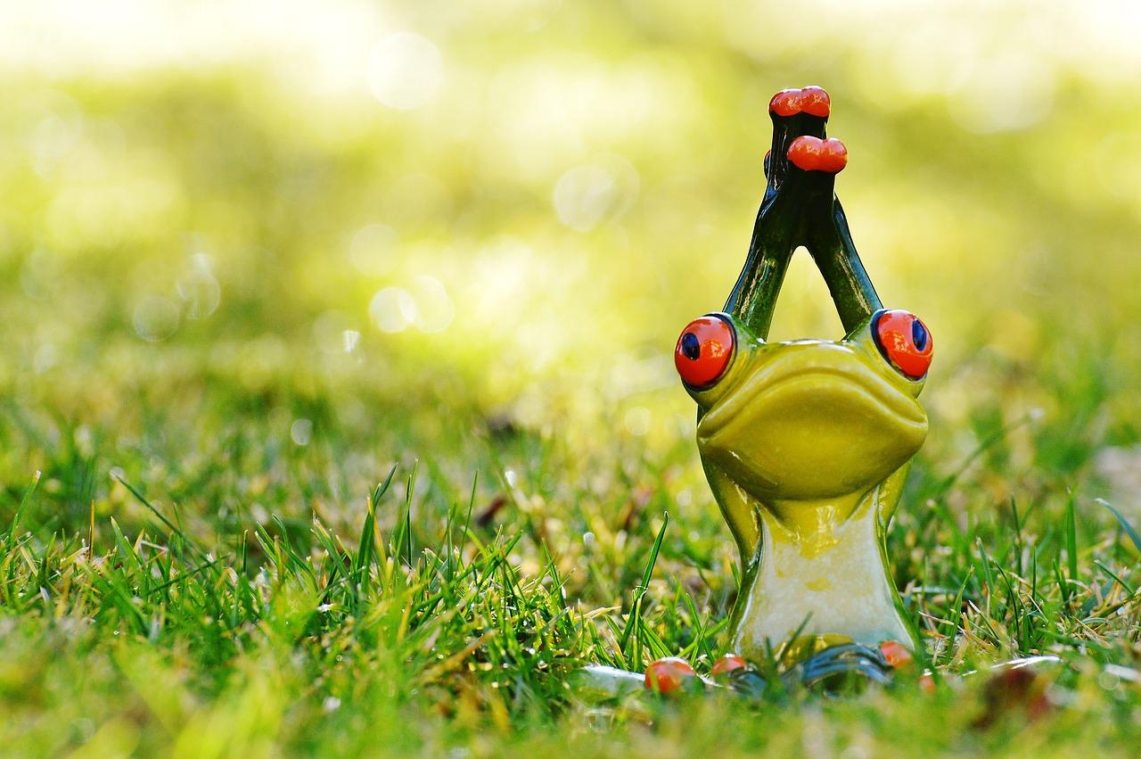 frog-1109786_1280