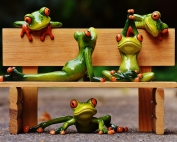 frogs-1644949_1280